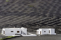 Lanzarote La Geria vineyard on black volcanic soil Stock Photography