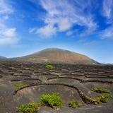 Lanzarote-Lageria-Weinberg auf schwarzem vulkanischem Boden Stockbilder