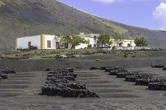 Lanzarote-Lageria-Weinberg auf schwarzem vulkanischem Boden Lizenzfreie Stockfotos