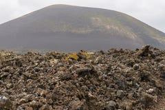 Lanzarote landscape Stock Image