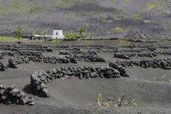 Lanzarote Losu Angeles Geria winnica na czarny powulkanicznej ziemi Obraz Stock
