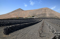 Lanzarote's local agriculture under mountait Stock Image