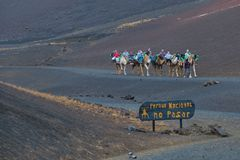 Camel rides at the Timanfaya national park royalty free stock images