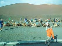 Camel Safari in Lanzarote stock photography