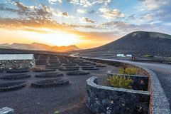 Sunset on vineyards in La Geria, Lanzarote, Canary Islands Royalty Free Stock Photo
