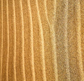 in lanzarote  spain    a  dry sand and the beach Royalty Free Stock Images