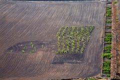 Lanzarote spain la geria vine screcultivation viticulture winery. Lanzarote spain la geria vine grapes wall crops cultivation viticulture winery stock image