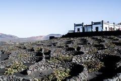 Lanzarote vinregion Royaltyfri Fotografi