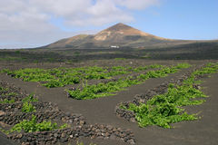 Lanzarote, volcanic landscape Royalty Free Stock Photography