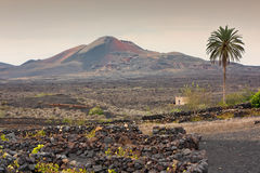 Lanzarote, volcanic landscape Stock Photos