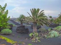 Lanzarote Wijnbouwschuilplaatsen op Zwart Vulkanisch Zand stock afbeeldingen