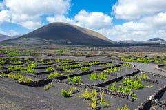 Lanzarote wijngaard Royalty-vrije Stock Foto's