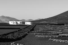 Lanzarote Wijngebied Stock Afbeelding