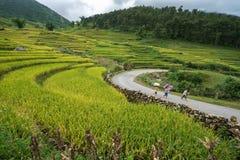Lao Cai, Vietnam - 30 agosto 2017: Paesaggio a terrazze del giacimento del riso nella raccolta della stagione con gli scolari che Fotografie Stock Libere da Diritti