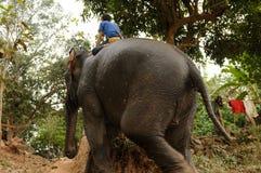 Lao Elephants are ready for a tourist safari or heavy work. Laos: Indian elephants are ready for a tourist safari or heavy work in the forest stock photo