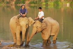 Lao men sit on elephants backs at the river bank at sunrise in Luang Prabang, Laos. LUANG PRABANG, LAOS - APRIL 14, 2012: Unidentified Lao men sit on elephants royalty free stock photo