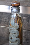 Lao Rice Whiskey com serpentes e escorpião, Laos Imagem de Stock