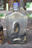 Lao Rice Whiskey med ormar och skorpioner, Laos Royaltyfri Fotografi