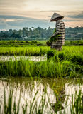 Lao's life. Photo about Agriculturist traditional in laos Royalty Free Stock Image