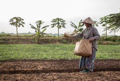 Lao's life. Photo about Agriculturist traditional in laos Stock Images