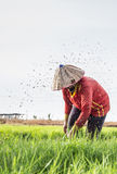 Lao's life. Photo about Agriculturist traditional in laos Royalty Free Stock Photography