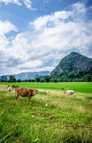 Lao's life Royalty Free Stock Photos