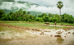 Lao's life. Photo about Agriculturist traditional in laos Stock Image