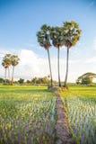 Lao's life Royalty Free Stock Photo