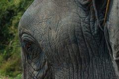 Lao słonia festiwal, Hongsa, Laos Obrazy Stock