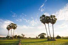 Lao życie zdjęcia royalty free