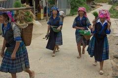 LAOCAI,越南, 6月10日:工作在米fi的未认出的农夫 库存图片