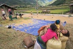 LAOCAI,越南, 6月10日:工作在米fi的未认出的农夫 库存照片