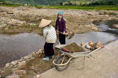 LAOCAI,越南, 6月11日:工作在米fi的未认出的农夫 免版税图库摄影