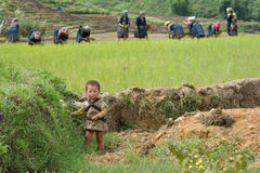 LAOCAI,越南, 6月10日:未认出的孩子和农夫米的fi 免版税图库摄影