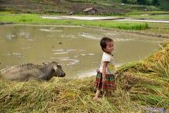 LAOCAI,越南, 6月10日:未认出的孩子和农夫米的fi 免版税库存照片