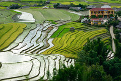 LAOCAI, ΒΙΕΤΝΆΜ, ΣΤΙΣ 10 ΙΟΥΝΊΟΥ: πεζούλι τομέων ρυζιού στο χωριό Tule επάνω Στοκ εικόνα με δικαίωμα ελεύθερης χρήσης