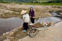 LAOCAI, VIETNAM, EL 11 DE JUNIO: Granjeros no identificados que trabajan en el arroz fi Fotografía de archivo libre de regalías