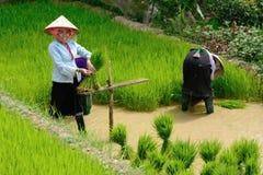 LAOCAI, VIETNAM, EL 10 DE JUNIO: Granjeros no identificados que trabajan en el arroz fi Foto de archivo