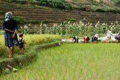 LAOCAI, VIETNAM, EL 10 DE JUNIO: Niño y granjeros no identificados en el arroz fi Foto de archivo