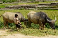 LAOCAI, VIETNAM, EL 10 DE JUNIO: Niño y granjeros no identificados en el arroz fi Fotos de archivo libres de regalías