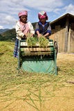 LAOCAI, VIETNAM, JUN 10: Niet geïdentificeerde landbouwers die in rijstfi werken Royalty-vrije Stock Foto