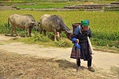 LAOCAI, VIETNAM, JUN 10: Unidentified farmers working in rice fi Stock Photo