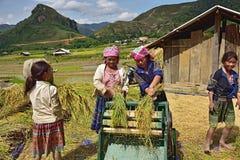 LAOCAI, VIETNAM, JUN 10: Unidentified farmers working in rice fi Royalty Free Stock Image