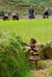 LAOCAI, VIETNAME, O 10 DE JUNHO: Criança e fazendeiros não identificados no arroz fi Imagem de Stock