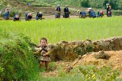 LAOCAI, VIETNAME, O 10 DE JUNHO: Criança e fazendeiros não identificados no arroz fi Fotografia de Stock Royalty Free
