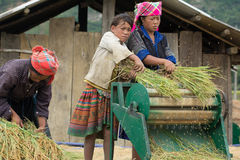 LAOCAI, VIETNAME, O 10 DE JUNHO: Fazendeiros não identificados que trabalham no arroz fi Fotos de Stock Royalty Free