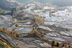 Laohuzui terrasserade sceniskt område 2 för fältet Royaltyfri Fotografi
