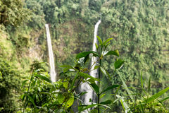 Laos Bolaven plateau Tad Fane waterfall Stock Images