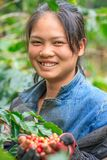 Laos girl coffee farmer is smiling for photo. Pakse, Laos – October 27, 2010: Laos girl coffee farmer is smiling for photo with coffee berries on hands in Stock Photo