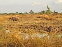 Laos landscape Stock Photos